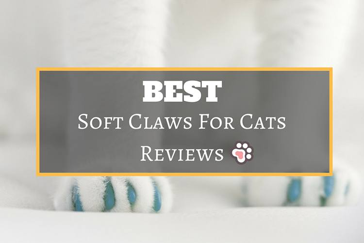 Best Soft Claws for Cats Reviews