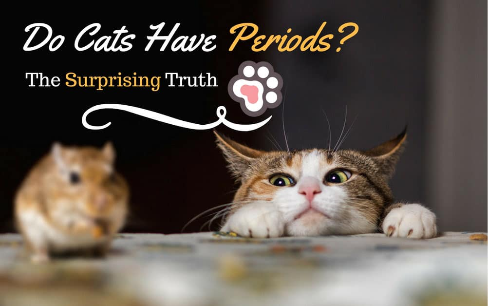Do Cats Have Periods? The Surprising Truth