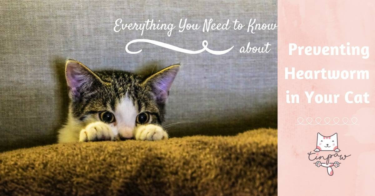 Everything You Need to Know About Preventing Heartworm in Your Cat