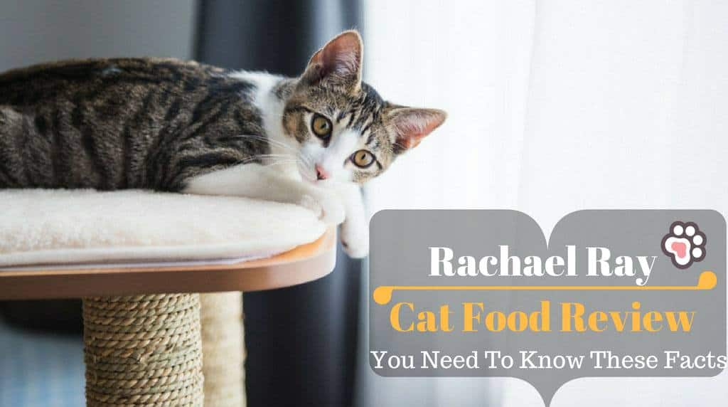 Rachael Ray Cat Food Review: You Need To Know These Facts