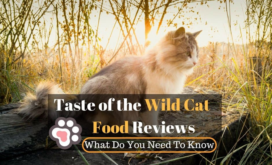 Wild Kitty Cat Food Reviews