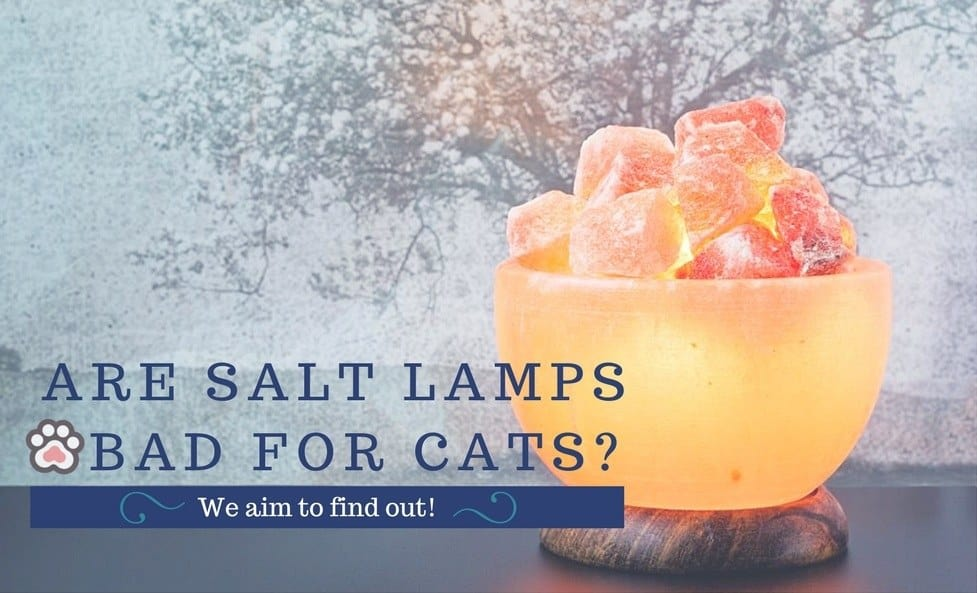Are Salt Lamps Bad for Cats?
