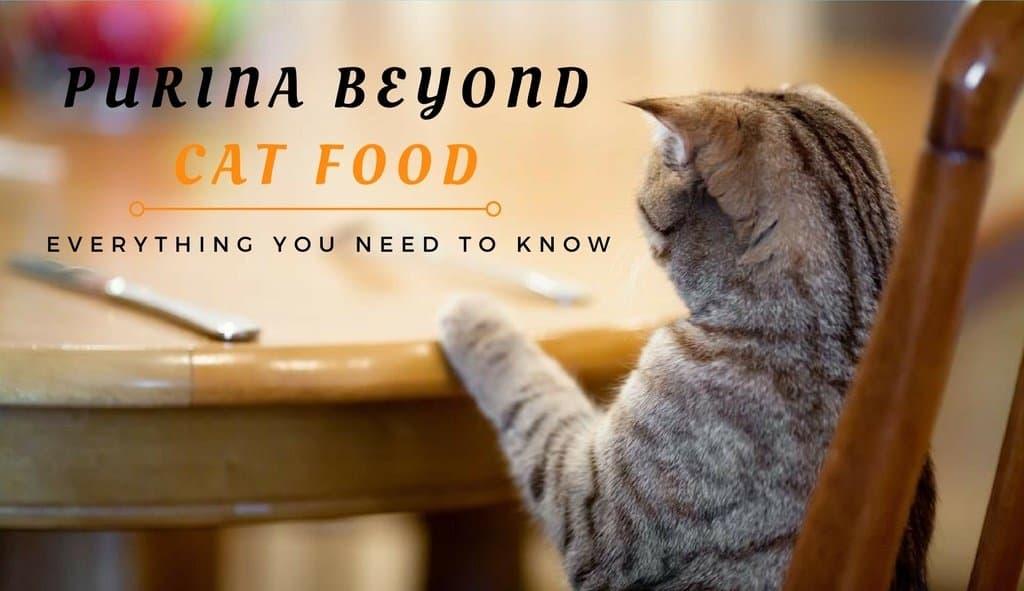 Purina Beyond Cat Food >> Purina Beyond Cat Food Review: Everything You Need to Know - TinPaw