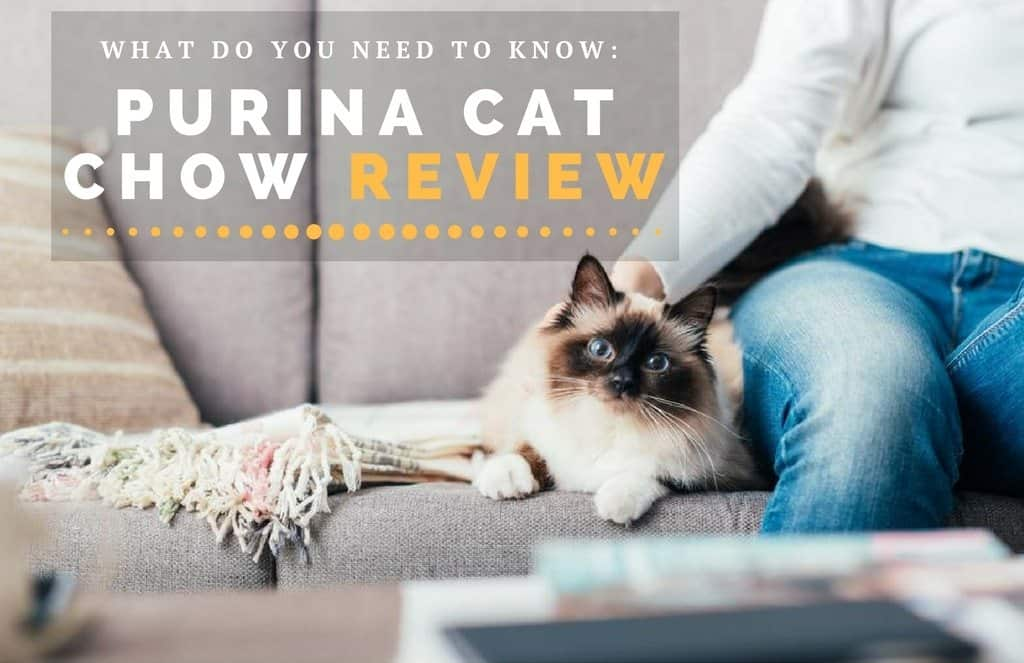 Purina Cat Chow Review: What Do You Need To Know About The Gentle Formula?