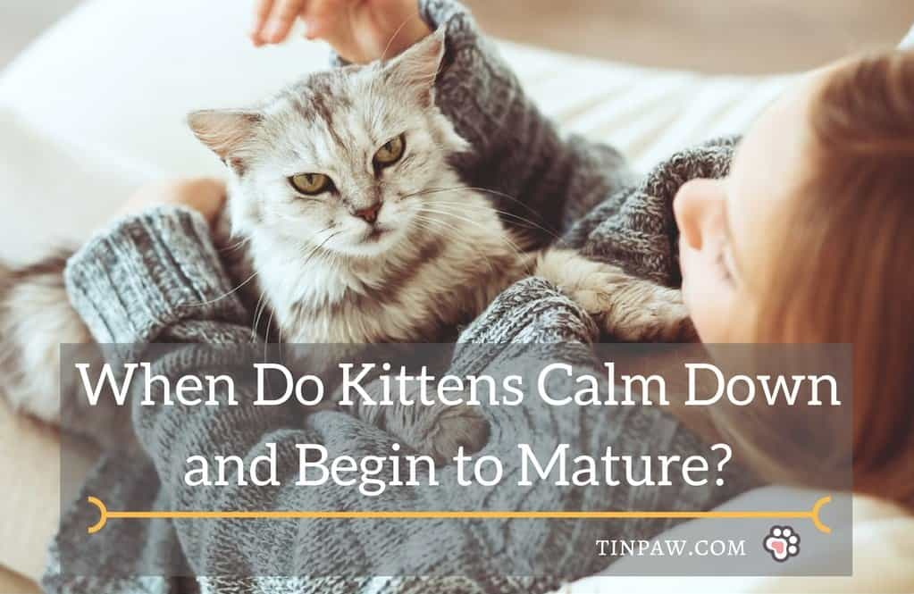 When Do Kittens Calm Down and Begin to Mature?