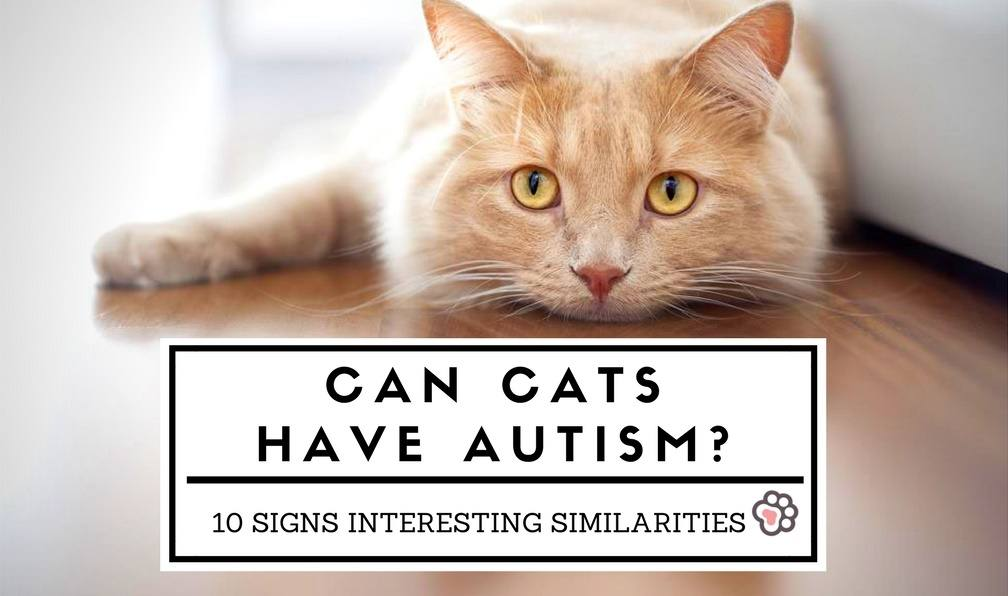 Can Cats Have Autism? 10 Signs Interesting Similarities