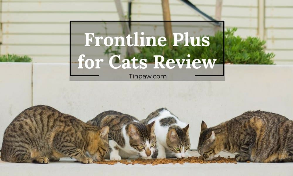 Frontline Plus for Cats Review: Everything You Need to Know