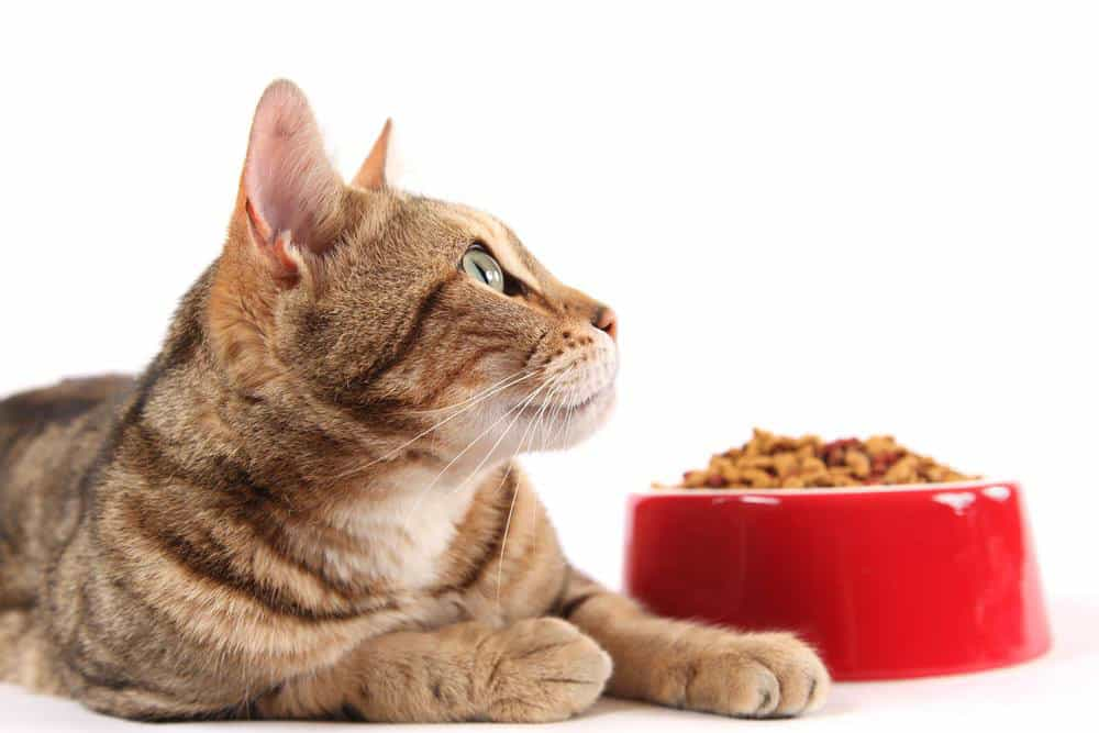 Best Cat Food for Cats with Urinary
