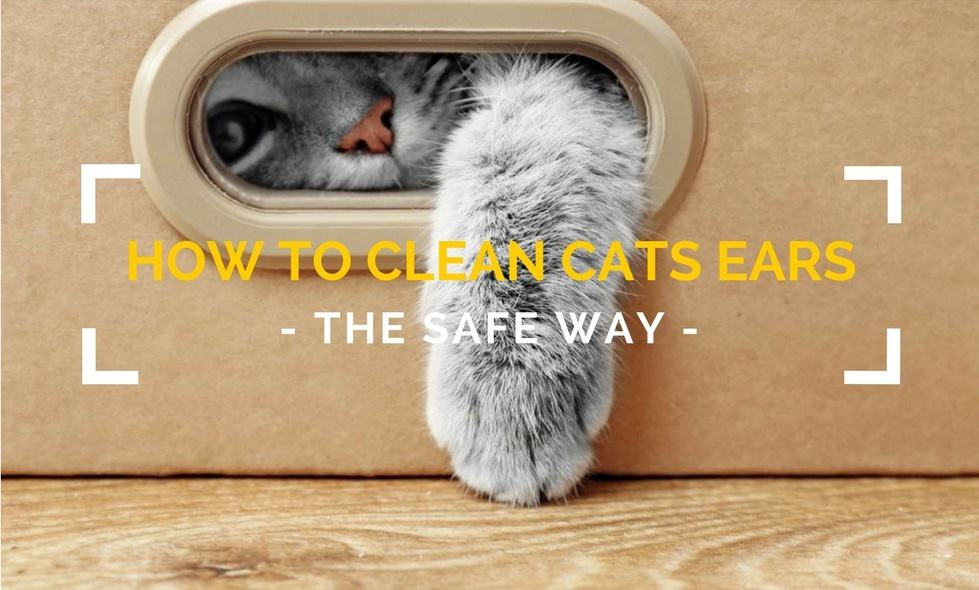 How to Clean Cats Ears – The Safe Way