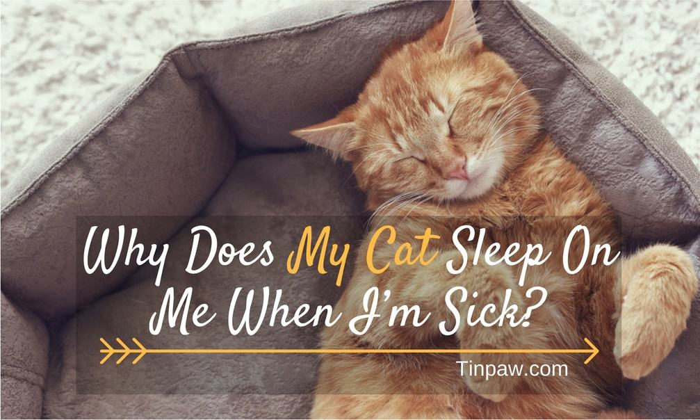 Why Does My Cat Sleep On Me When I'm Sick? The Cute Truth