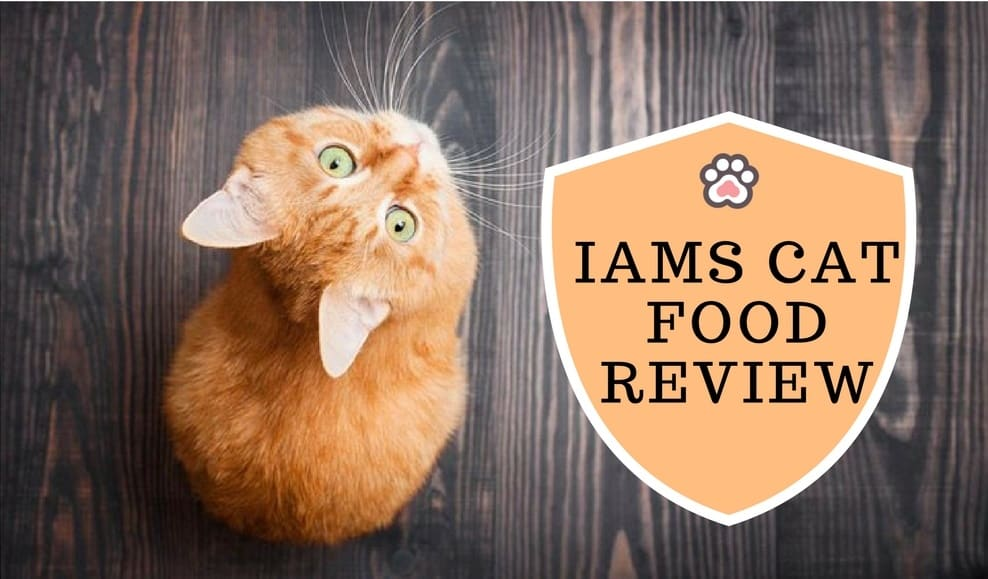 IAMS Cat Food Review: Everything You Need to Know