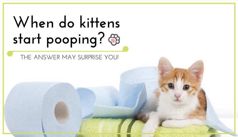 When Do Kittens Start Pooping? The Answer May Surprise You!