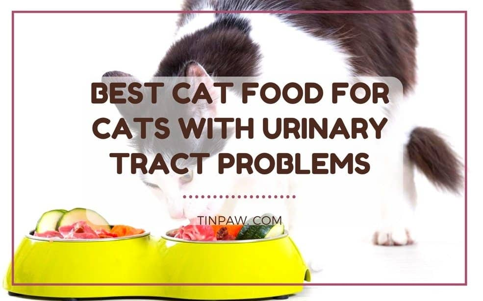 Best Cat Food for Cats with Urinary Tract Problems
