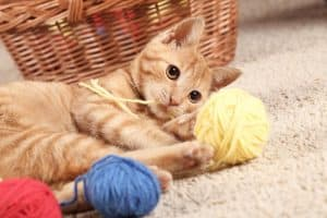 The best cat toys for your cat