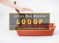 Luuup-Litter-Box-Review