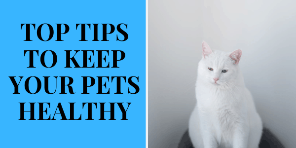 Top Tips to Keep Your Pets Healthy